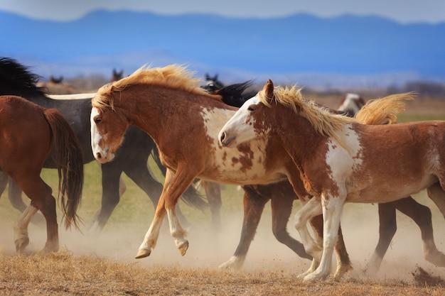 実行している野生の馬