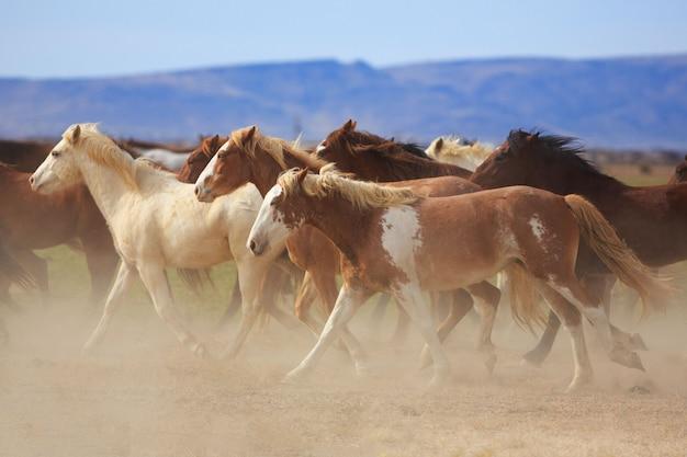 ウエスタンランチのほこりで走っている野生の馬