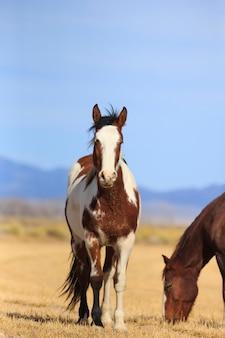 ユタ州の牧場の馬