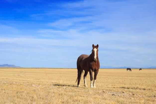 フィールドの茶色の馬