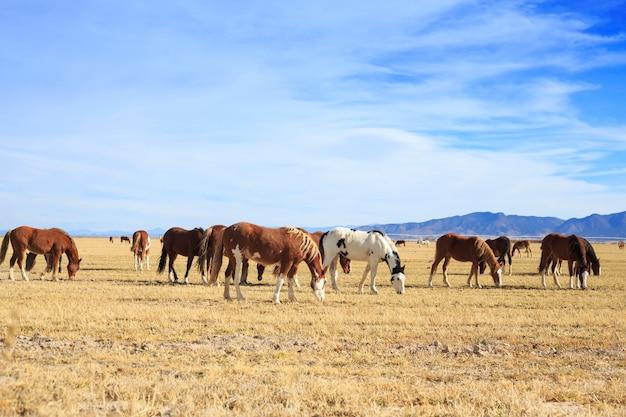 放牧馬の群れ