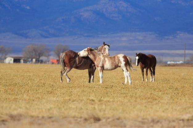 背中を掻く馬