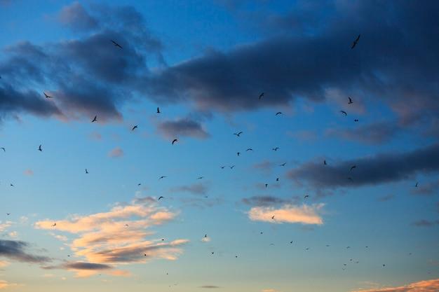 夕焼け空を旋回するカモメの群れ