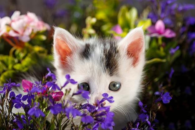 フラワーガーデンに隠れている子猫