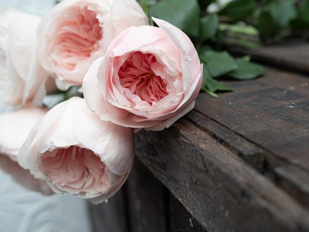 芸術的なぼかしの美しい牡丹形の繊細なピンクのバラ。