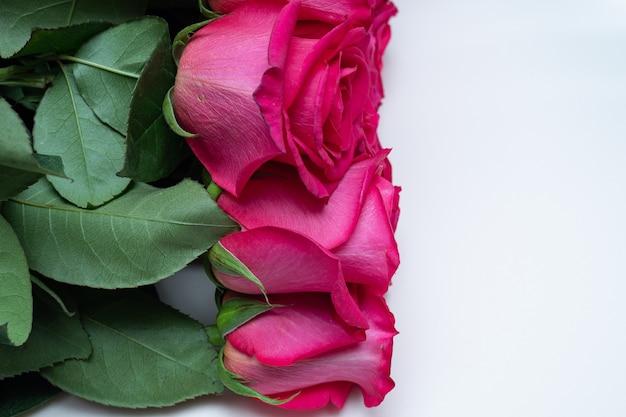 Красивые свежие яркие розы на светлом фоне