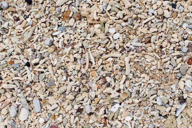 Ракушки и песок фон. разноцветные ракушки. текстура пляжа.