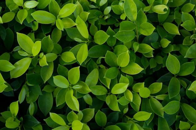 緑の葉のテクスチャ背景