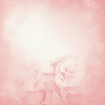 バラの花とピンクの背景