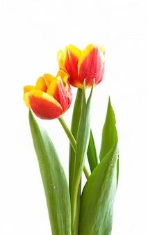 День святого валентина двух цветов подарок.