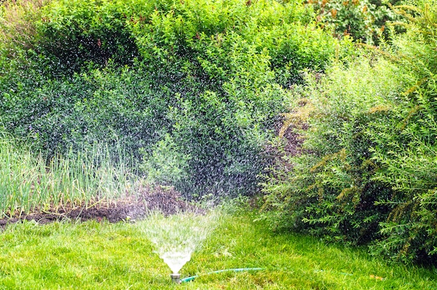Спинклер в саду, закат