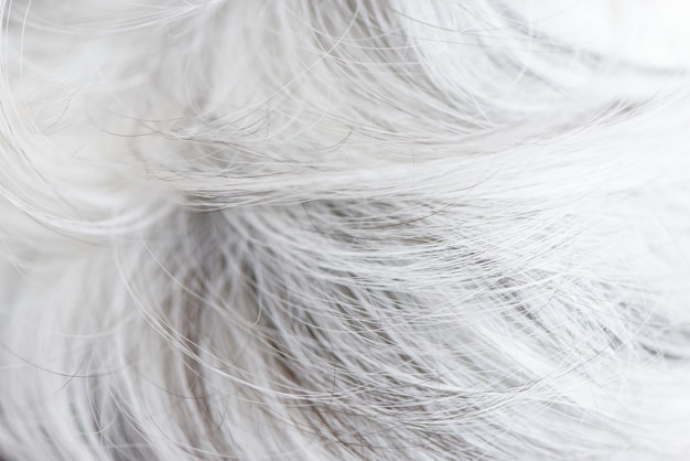 白い犬のウールの毛皮はテクスチャ壁紙を閉じます。