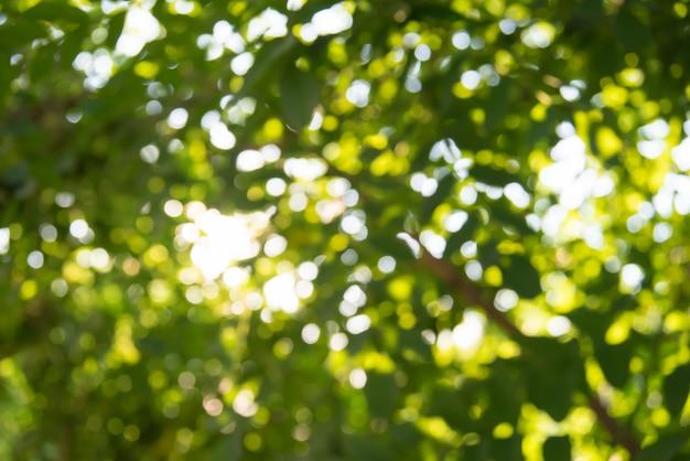 抽象的なぼやけた葉を持つ新鮮な健康的なグリーンバイオ背景
