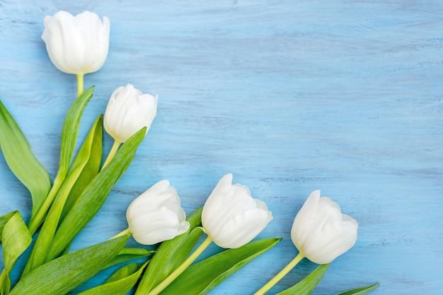 青い木製の背景に繊細な白いチューリップの花。バレンタインデー、母の日のコンセプト。
