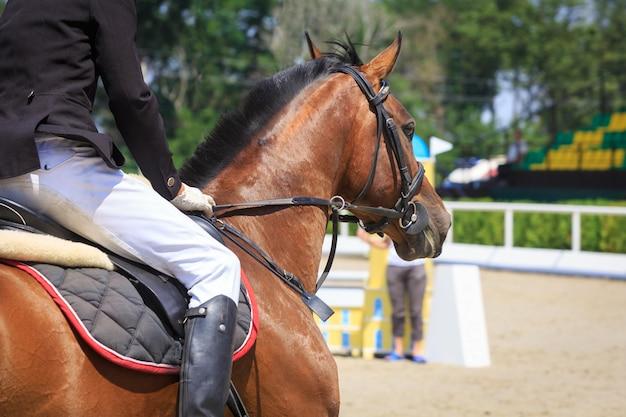 Всадник садится на лошадь