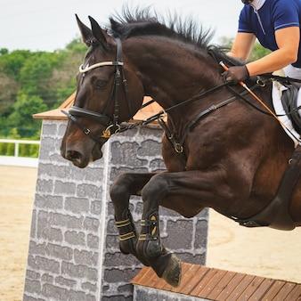 Лошадь прыгает через препятствие в соревнованиях по прыжкам