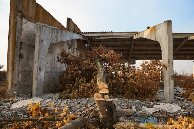 家畜農場の破壊された鉄筋コンクリートの建物の近くの製材木