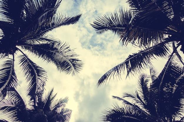 下から見た椰子の木