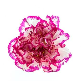 紫のエッジを持つ白い花