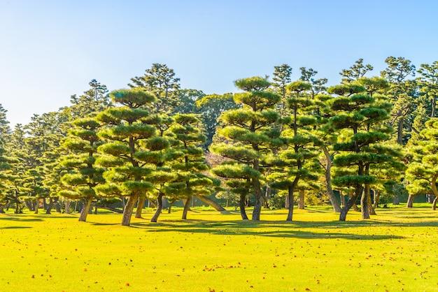 東京シティ日本で皇居の庭の盆栽の木