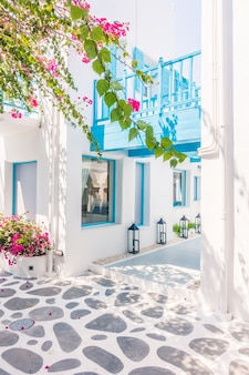 Бугенвилии санторини белые деревни красивая