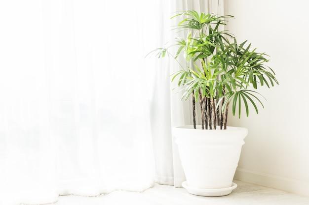 鉢植えの緑の植物