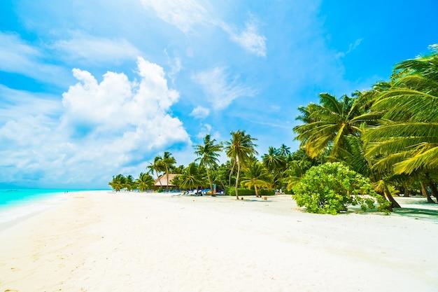 Дерево небо острова пляж море