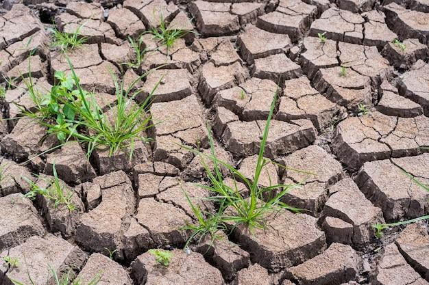 干ばつの季節の乾いた壊れた粘土の地面