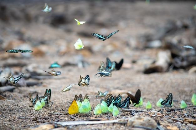 土地の上を飛んでいる野生の蝶をクローズアップ。