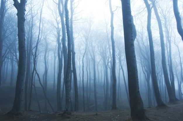 Сухие деревья