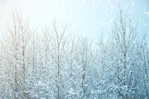 自然の冬の背景。