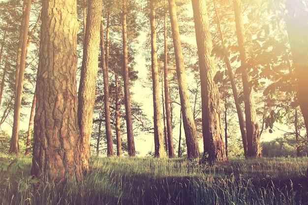 夏の森の自然。