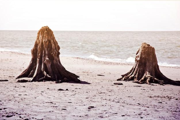 スロヴィンスキー国立公園の樹木の幹。