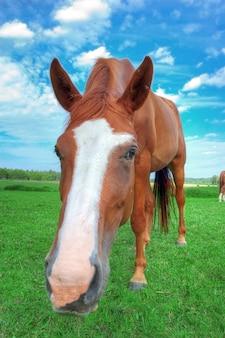 馬の顔の近くに