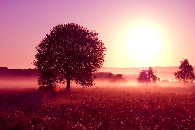 Дерево с большим солнцем