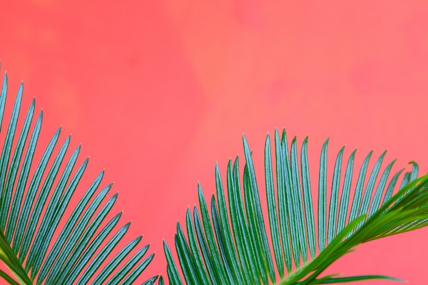 Тропический фон с ветвями пальм