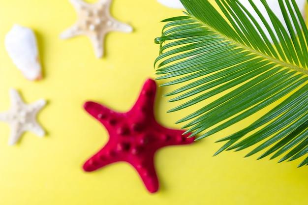 Тропический фон с морской звездой