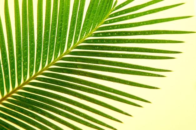 黄色の紙の背景にヤシの葉