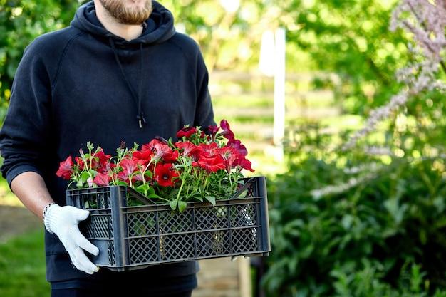 庭師は店で木枠に花を運んでいます。