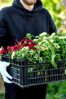 Садовник с цветами в ящике