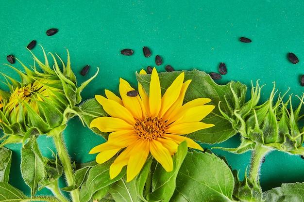 ひまわり、葉、種子の花。秋のコンセプト。