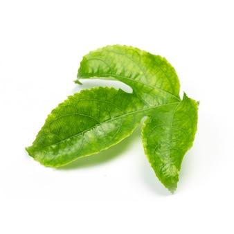 Зеленые листья страсть фрукты закрыть макрос выстрел набор, изолированных на белом фоне