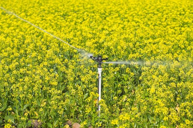 菜種の広い面が水をまかれている