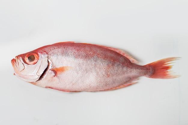 メバチ魚は白い背景で隔離します