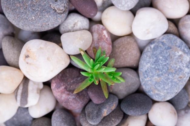 小さな緑のジューシーなトップビューでさまざまな小石