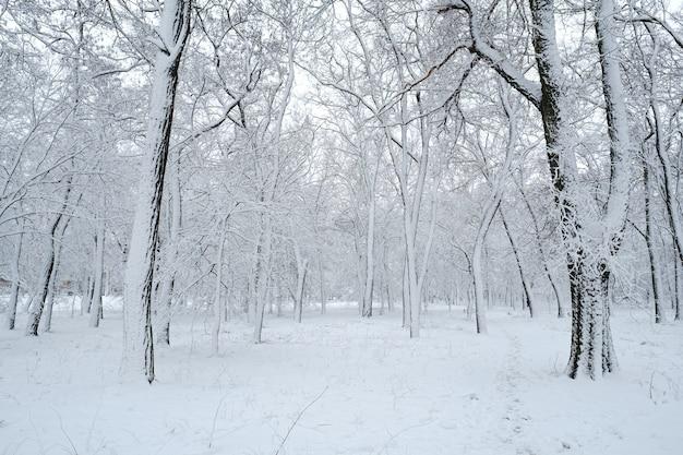 吹雪後の雪の冬の公園