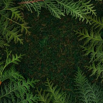 Зеленый фон из натуральных материалов мха и веток