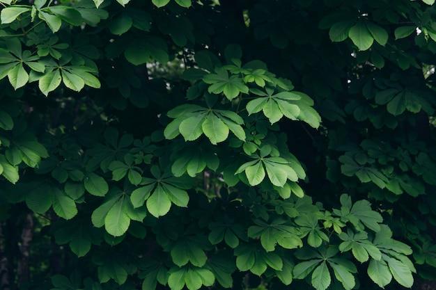 木の緑の葉から背景テクスチャ
