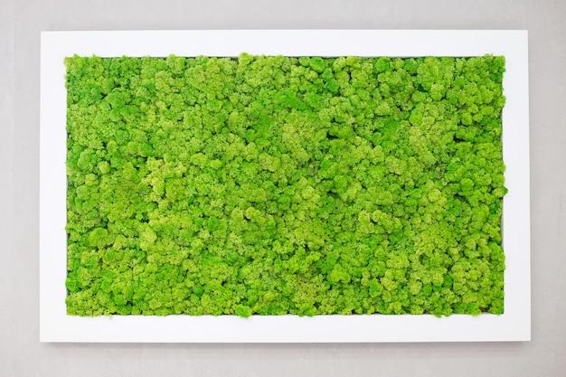 Зеленый мох на стене в виде картины. красивая белая рамка для картины. экология.