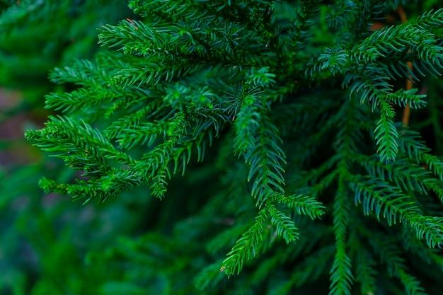 植物園の樹木や植物。植物園の密な緑の植生。テネリフェ。スペイン。